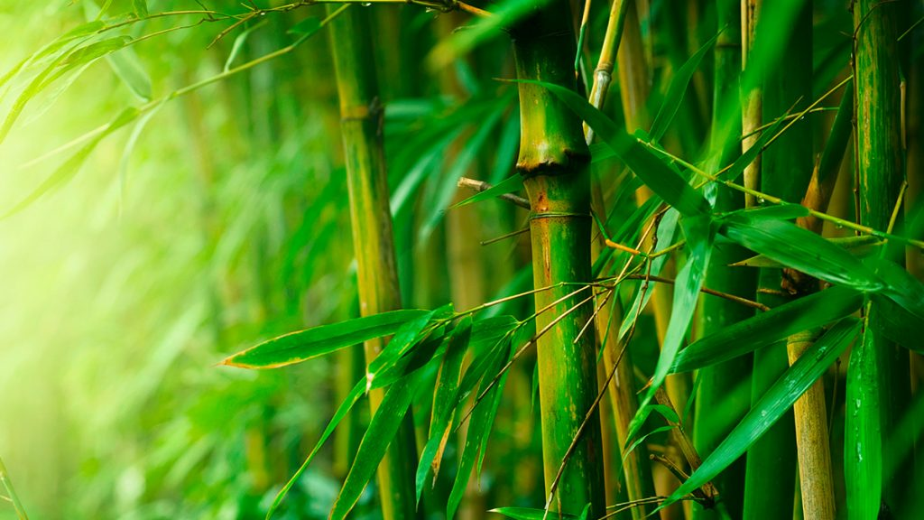 a picture of some beautiful bamboo
